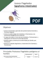 3. Protozoos Flagelados  (Zoomastigophoros intestinales)