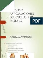HUESOS Y ARTICULACIONES DEL CUELLO Y DEL TRONCO