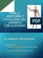 Sistema circulatorio ok