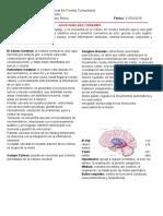 2.3. Anatomía del cerebro. Tito Chipana Mary Reina