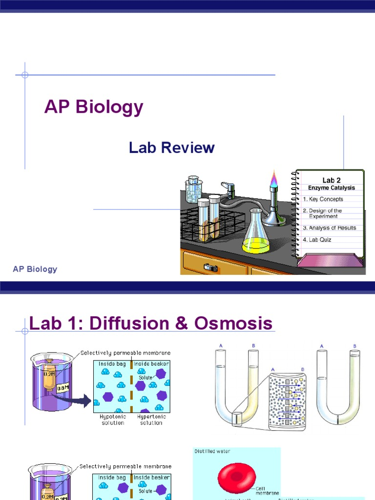ap biology lab exam essays Ap biology includes those topics regularly covered in a college writing essays, pre-lab assignments, projects, preparing for (ap lab 6) unit test on genetics.