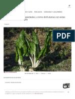 Las acelgas, sus propiedades y cómo disfrutarlas con estas recetas de temporada.pdf