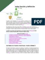 402977508-Tejidos-vegetales-funcion-y-definicion-docx.docx