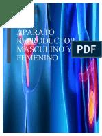 2.APARATO REPRODUCTOR MASCULINO Y FEMENINO