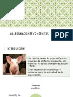 malformacionescongnitasencerdos-140918145100-phpapp01.pdf