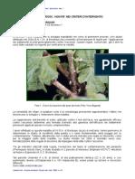 libretto2036-01-1 (1).pptx