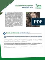 Gestion Integree - Rhizoctone Brun Web