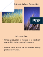 Commercial Arable Wheat Production