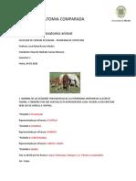 ANATOMIA COMPARADA 2
