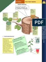 tejidosvegetales-140627083235-phpapp02.pdf