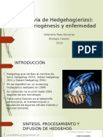 La vía de Hedgehog(erizo)