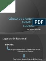 CLÍNICA DE GRANDES ANIMALES legislación