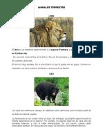 ANIMALES TERRESTRE, ACUATICOS, AEREOS.docx
