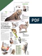 Animales nativos Octava Region. Diario el Sur