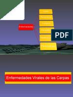 Clase_Enfermedades2