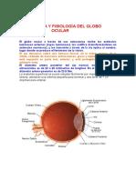 2º Asunto Teórico  Anatomía y fisiología del Aparato Ocular
