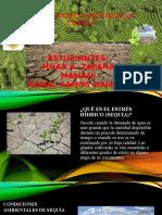 ESTRÉS HIDRICO(SEQUIA)DE LA CEBADA.pptx