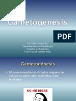 Gametogénesis - 2012