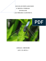 Entomologie Caracterizarea Clasei Insecta