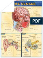 Bar chart of the senses.pdf