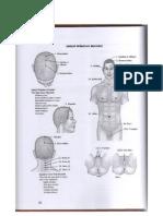 Body Parts in Sanskrit