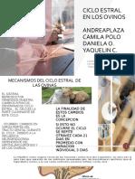 CICLO ESTRAL EN LOS OVINOS 2.pptx
