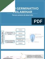 Disco germinativo trilaminar