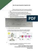 Respuestas Taller de repaso bioquímica.docx