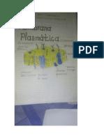 Que función  cumple  la Membrana plasmática