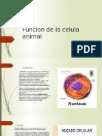 Funcion de la celula animal 1.pptx (1).pptx