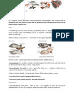 Peixes - Dra. Licínia de Campos