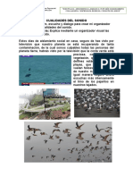 CUALIDADES DEL SONIDO (1).docx