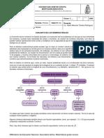 1P GUIA4 NUMEROS REALES.pdf