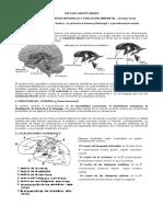 SISTEMA NERVIOSO III.docx