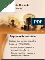 reproduosexuada-meioseefecundao