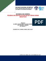 DISEÑO EXPERIMENTAL NO.6 - PRUEBAS DE INDENTIFICACIÓN DE GRAM NEGATIVAS