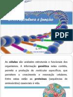 1.1. dna e síntese proteica