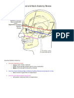 1_Head and Neck Anatomy Review Lite