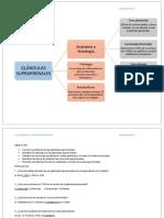 Glándulas suprarrenales-MAPA,OBE,PREG.