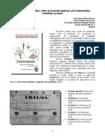 Conexiune spre viitor, inter si transdisciplinara,  prin intermediul revistelor şcolare