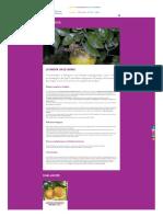 cliniquedesplantes_fr