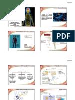 Bioquímica del sistema nervioso_est