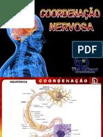 ppt sistema nervoso