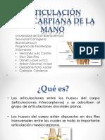 ARTICULACIÓN INTERCARPIANA DE LA MANO (1)