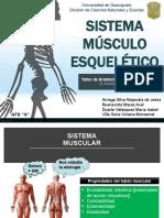 Sistema Músculo Esquelético.pptx