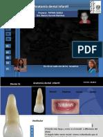 Anatomía dental infantil 4590