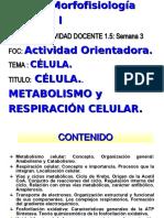 Metabolismo y Respiración celular