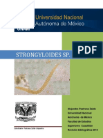 strongyloides-sp