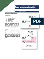 PDF Metabolismo de los aminoácidos.pdf