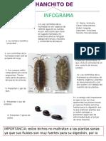 INFORME-DE-bichos-2